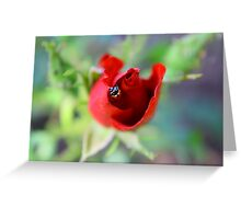 Lady Bug Hide Out Greeting Card