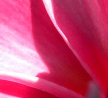 Pink plumeria #2, Big Island, Hawaii Sticker