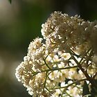 find me a secret garden... by Amy Simons