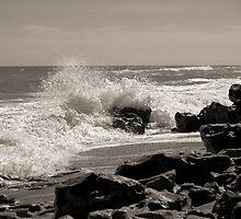 Wave Stop - BW by Donna Adamski