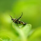 Bugs life by khairusy