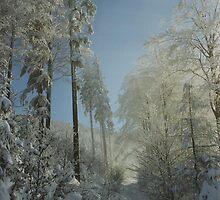 Winter Walk by Martin  Hoffmann