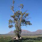 Tree & Flinders Ranges by MarianH