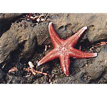 Seastar at Carrickalinga Photographic Print