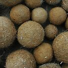 Seagrass Balls by catdot