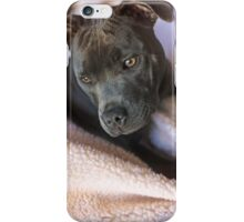 Pure Blue Staffy iPhone Case/Skin