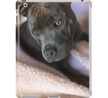 Pure Blue Staffy iPad Case/Skin