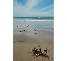 Silver Sands Seaweed Photographic Print