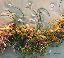 Seagrass and Seaweed by catdot
