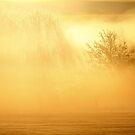 16.2.2015: Winter Morning Magic II by Petri Volanen