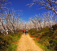 Walking in the Alpine National Park by Peter Hocking