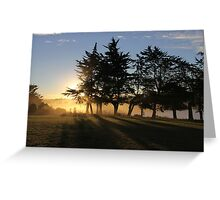 Together We Stand Limbs Outstretched Facing the Sunset Of Another Glorious Day Greeting Card
