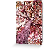 Not So Plane Tree Greeting Card