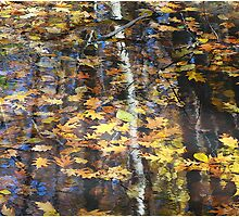 Leaves With Birch Reflections by Deborah  Benoit
