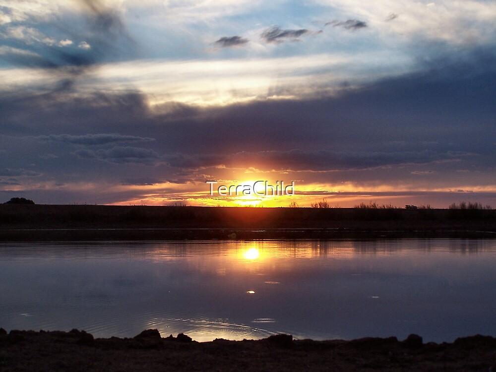 Echidna At Sundown by TerraChild
