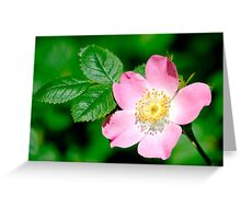 Wild Rose (rosa canina) Greeting Card