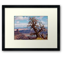 Twisted Juniper at Dead Horse Point, Utah Framed Print
