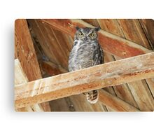 Great Horned Owl - 2869 Canvas Print