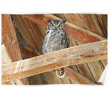 Great Horned Owl - 2869 Poster