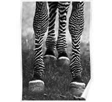 Zeb Legs Poster