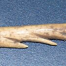 Antler Harpoon Point by barnsis