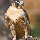 Stylized photo of a Perigrine falcon perched on falconer's leather glove. by NaturaLight