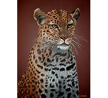 Leopard Elegance Photographic Print