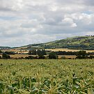 Panoramic Cornfield Lewes by FakeFate