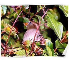 Hiding bird Poster