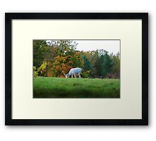 White Fallow Stag Framed Print