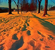Winter avenue trail at sundown | landscape photography by Patrick Jobst