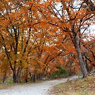 Lost Maples Autum Color 1 by RobGreebonPhoto