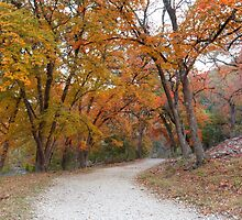 Lost Maples State Park Trail 5 by RobGreebonPhoto