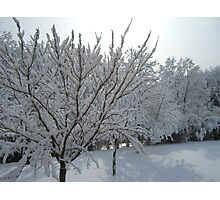 Snowy Trees Photographic Print