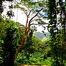 Manoa Rainforest by kevin smith  skystudiohawaii