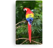 Scarlet Macaw - Costa Rica Canvas Print