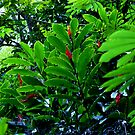 Manoa Rainforest Ginger by kevin smith  skystudiohawaii