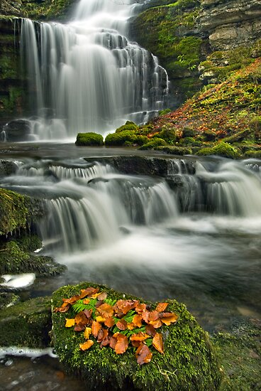 Scalebar Force, Settle by Steve  Liptrot