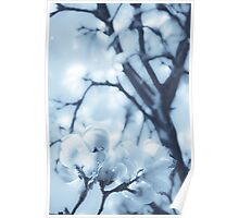Spring or winter magnolia? Poster
