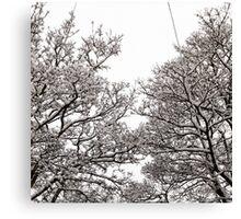 Monochrome Branches Canvas Print