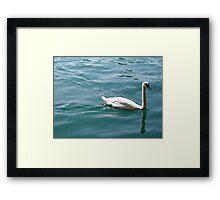 Swan on Lake Zurich Framed Print