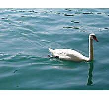 Swan on Lake Zurich Photographic Print