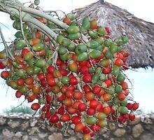 Fruit by Pambud96