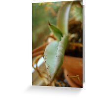 A Prickly Pet Greeting Card