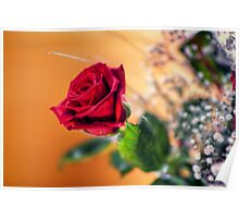 Red Rose of Love Poster