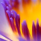 Sun in the flower by khairusy