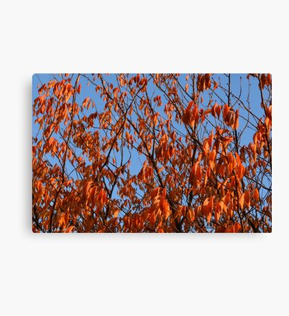 Nature 5 Canvas Print