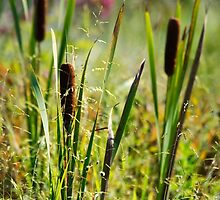 Cattails by Christina Rollo