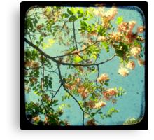 Primavera - TTV Canvas Print