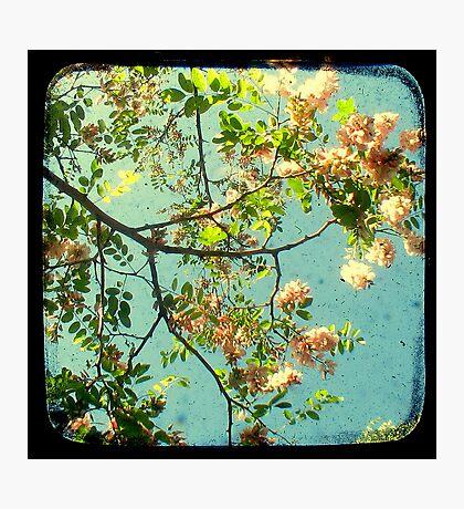 Primavera - TTV Photographic Print